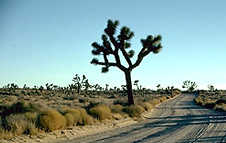 Joshua Tree National Park, California, Copyright 1999 - 2004, OutdoorPlaces.Com, All Rights Reserved