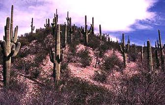 Saguaro National Park, Arizona, Copyright Broderbund, Division of TLC, Division of Mattel, All Rights Reserved