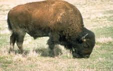 Photo Courtesy of the United States National Park Service